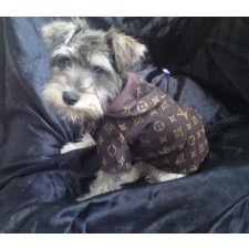 a yorkie dog wearing a LV coat