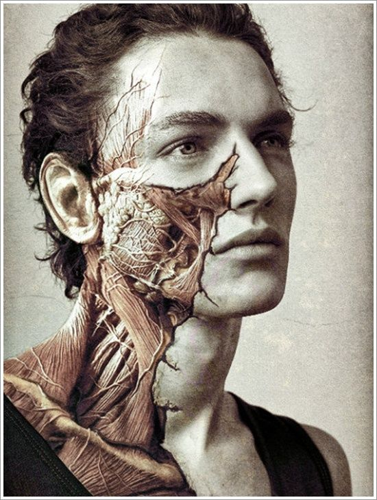 Horse Jaw Tattoo: 24 Best Skin Wars Images On Pinterest