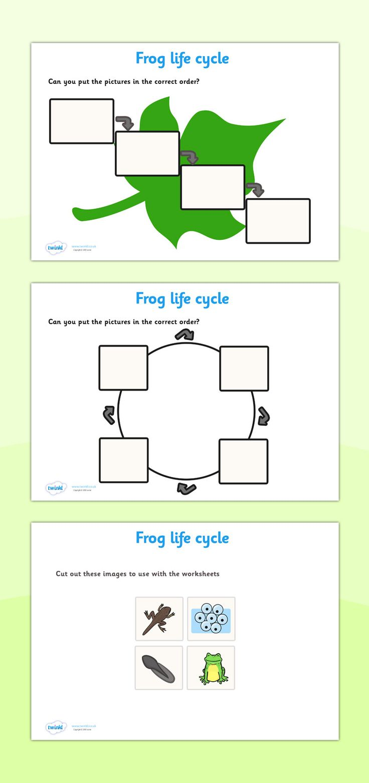 Twinkl Resources Gt Gt Frog Life Cycle Worksheets