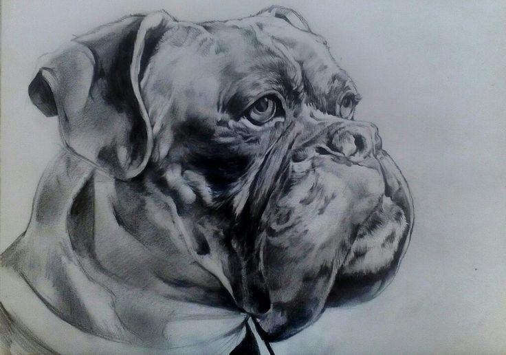 Sketch Potrait on Canson Paper A3 By Artist Mike Eleftheriou Potrait: Boxer dog