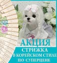 Стрижка йорков, мальтезе, ши-тцу в корейском стиле. www.zoo-ok.ru