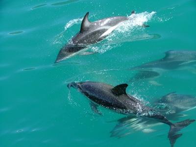 Dolphins having fun