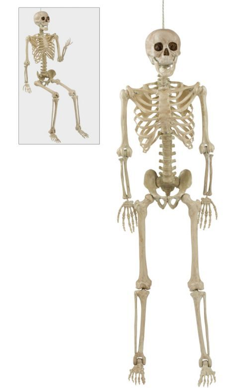 Life-Size Posable Skeleton - Party City