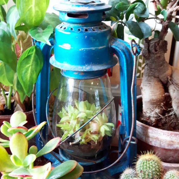 Vintage Terrarium #vintage #terrarium #homestyle