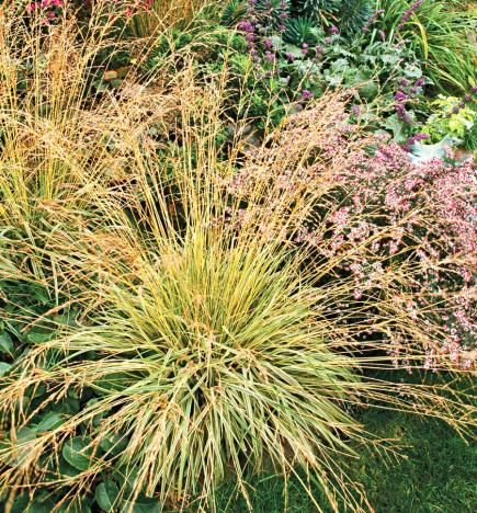91 best images about ornamental grasses on pinterest sun for Tall grasses for shade