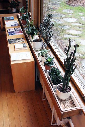 alvar alto, windowsill of cacti