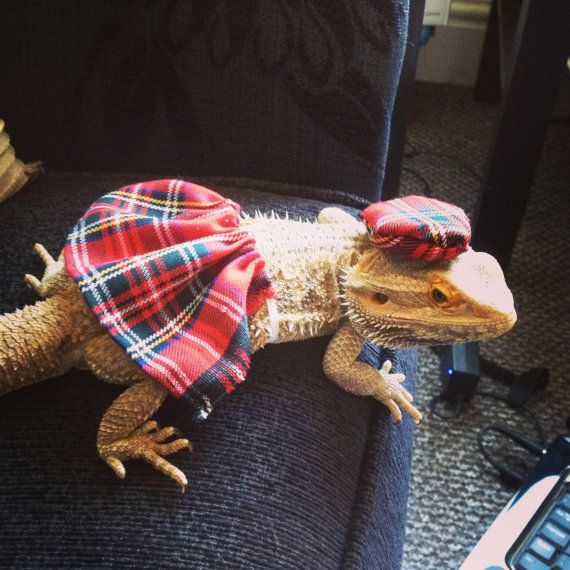 scottish kilt costume Bearded dragon clothes/ by Monstertrims