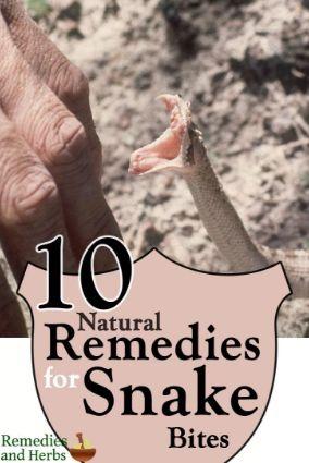 Mengobati gigitan alami dan efektif dengan empat obat homeopati - http://www.tokojualbungapapan.com/mengobati-gigitan-alami-dan-efektif-dengan-empat-obat-homeopati/