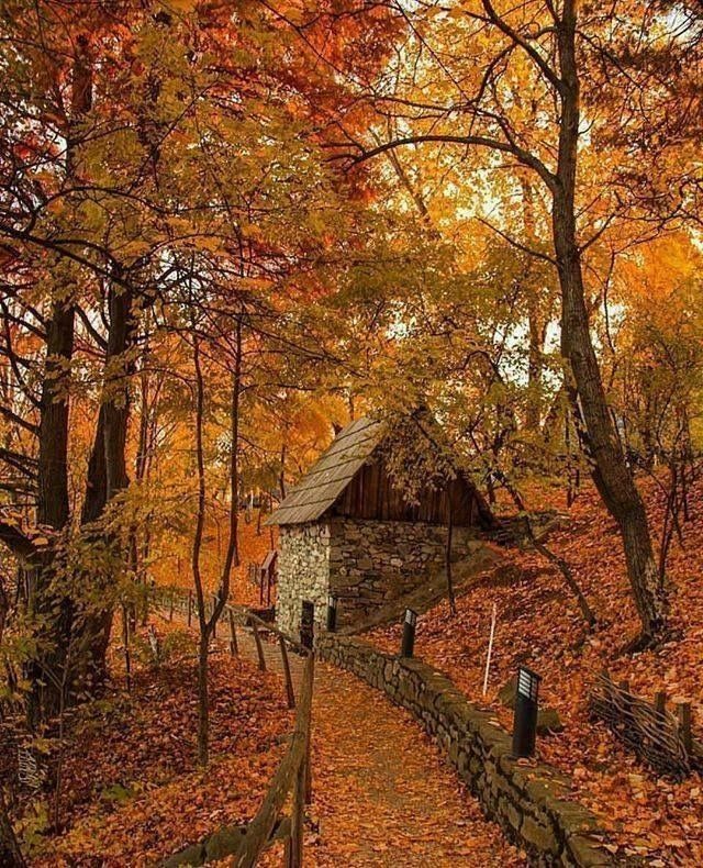 Best 20 autumn pictures ideas on pinterest - Pics of fall scenes ...