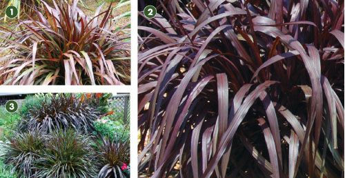 1000 images about ornamental grass ground covers on for Fountain grass for shade