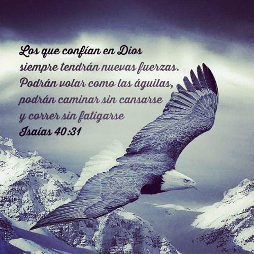 Isaías 40:31 pero los que esperan a Jehová tendrán nuevas fuerzas; levantarán alas como las águilas; correrán, y no se cansarán; caminarán, y no se fatigarán. ♔