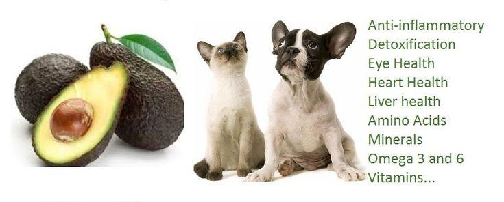 Are Avocados Good For Dogs - http://pets-ok.com/are-avocados-good-for-dogs- dogs-268.html | Cat nutrition, Avocado health benefits, Rich dog
