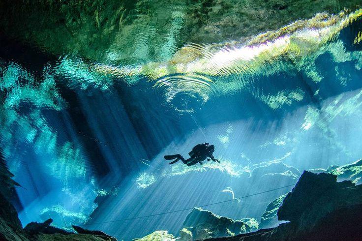 In beeld: de mooiste onderwaterfoto's van 2014 - Planet Earth, Ecologie - Knack.be
