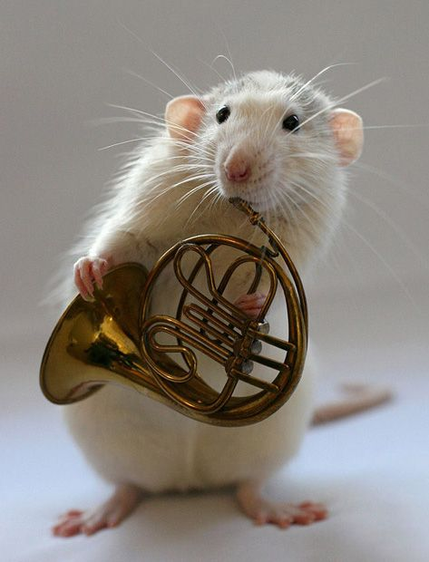 Mousie French Horn. Wonderful Nathan. Just wonderful!