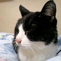 SDにクロサン画像がまだ居た😺w #はちわれ#愛猫#眠り猫#昔の写メ