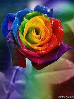 Decent Image Scraps: Animated Roses 2
