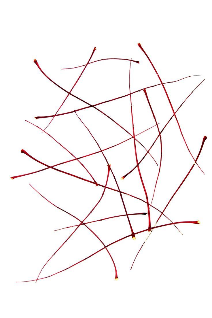 Trazos. Ramas de ailanto o árbol de los dioses, tras la caída de las hojas. Ribera del Guadiana. Peralvillo. (Ciudad Real)