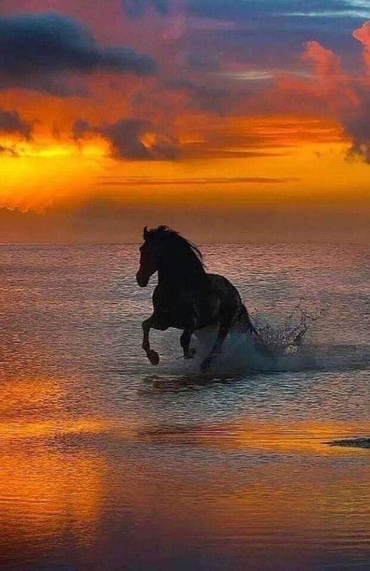 Pferdebilder Bei Sonnenuntergang am Meer