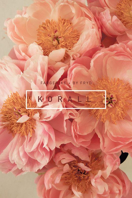 Fototapet K O R A L L, byFryd for Fargerike - i butikk fra 15.april!
