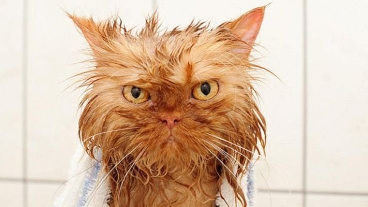 Cute Angry Cats Bathing Time - Adorable Cats Videos 2018