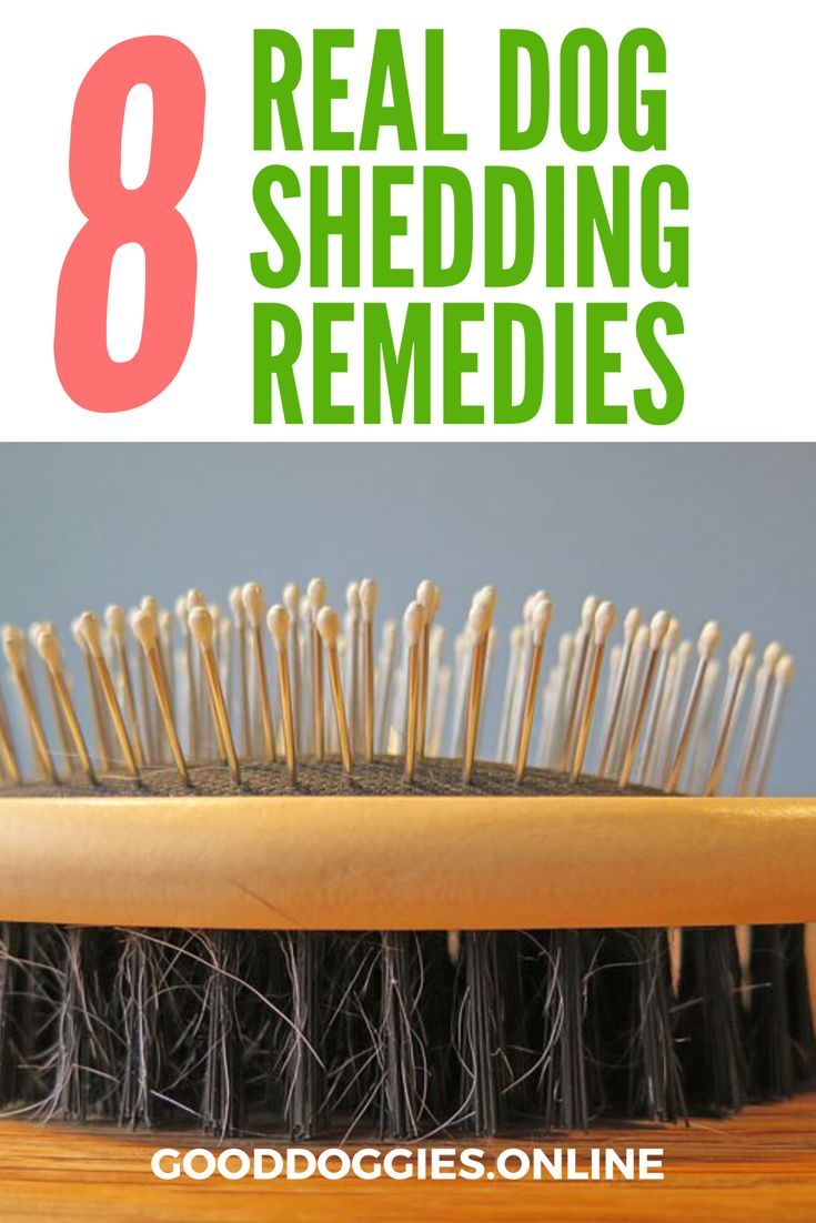Being a #dog parent means having to deal with shedding. But what do you do when the shedding becomes too much? Try these dog #shedding remedies! #GoodDoggies