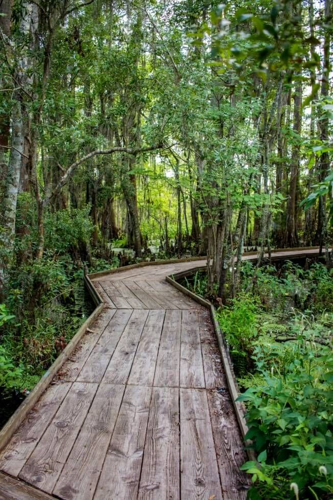 Boardwalk in Jean Lafitte National Park New Orleans Swamp