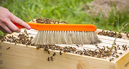 Are you a new beekeeper wondering how to buy honey bees? Carolina Honeybees