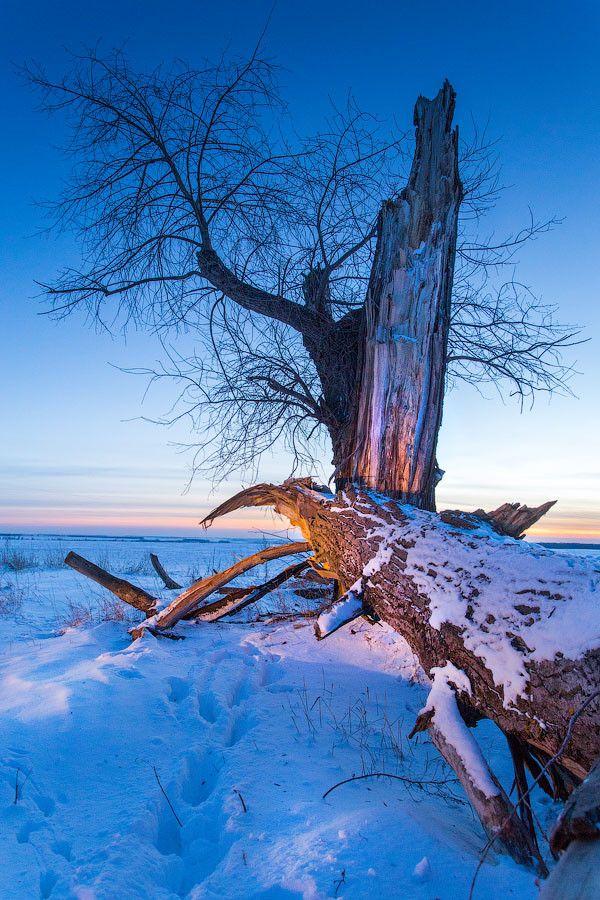 Broken tree by Mark Sivak on 500px