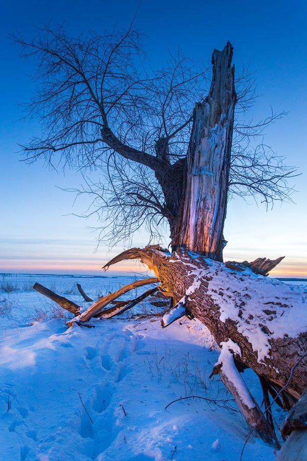 Broken tree by Mark Sivak on 500px