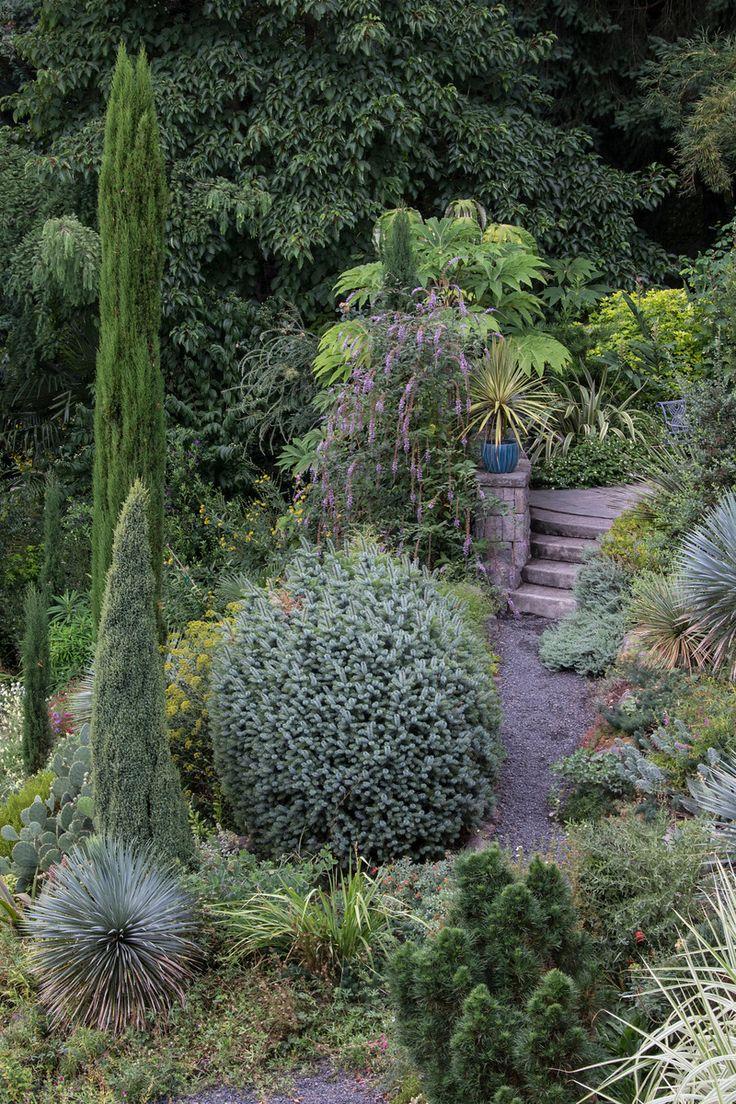 85 Best Conifers Images On Pinterest Landscaping Ideas