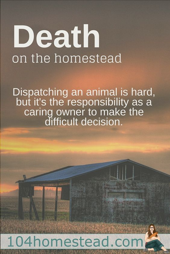 The reality is that you have to be strong when you become a homesteader. You have to make the tough calls and you have to be prepared to deal with death.