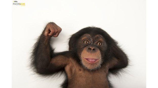 Bebé chimpancé de tres meses