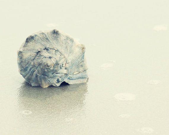 Seashell art coastal decor beach decor blue and gray wall art beach condo decor blue sea shell on Etsy, $21.00