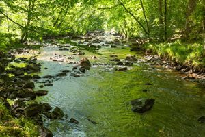 The river Teign in Fingle Woods, Dartmoor. The ancient woodland in Devon is one landscape being restored by the National Trust