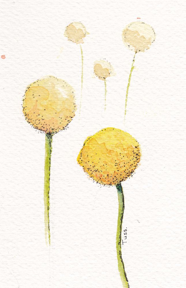 Watercolour Billy Buttons Art Print By Tussock Studio X Small In 2020 Billy Buttons Watercolor Flowers Button Art