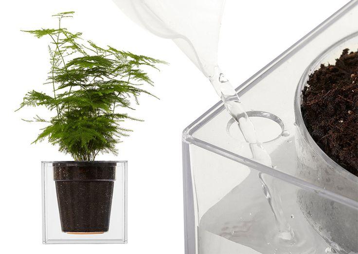 Boskke Clear Cube Self-Watering Planter | #Horticool #ApartmentGardening #Gardening
