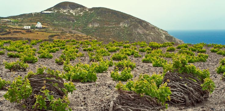 The Greeks are known for many things - the Acropolis, democracy and the gyro being just a few. But there is one Greek creation that is too often overlooked. That's right - Greek wine! With a winema...