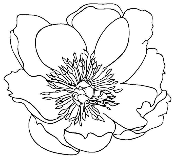 Тим Хольц штамп 2015 сада цветок 5 Штамповщики анонимного H22549 масштабирования изображения