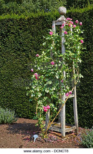 Ornate rose trellis in the form of a bossed wooden obelisk  supporting a pink…