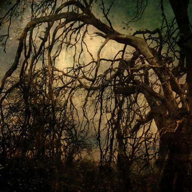 Bett Gallery Hobart - Troy Ruffels - Poplar tree