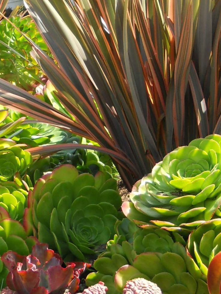 Create A Drought Friendly Landscape. (Originally Featured On A California Friendly  Landscape