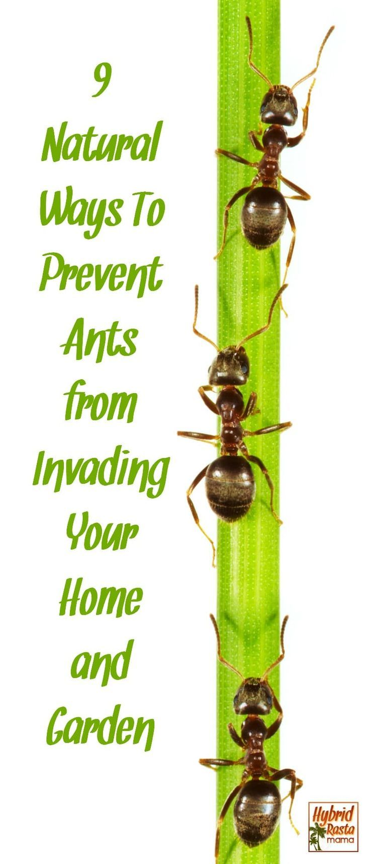 How To Get Rid Of Ants 9 Natural Ways To Prevent Ants Get Rid Of Ants Rid Of Ants Ants In House