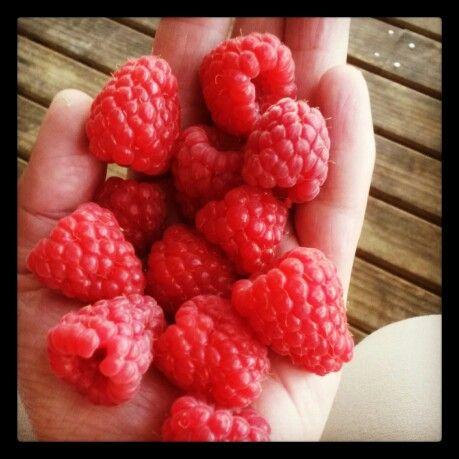 #Raspberries #Yum ♥♡ #Bees