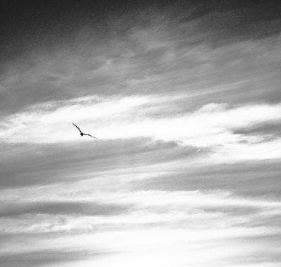 photography, 2012, Rebecca Lee Coates