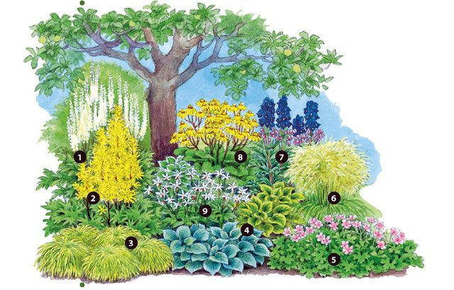 Gehölzunterpflanzung