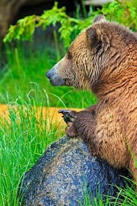 Great shot of a lovely bear