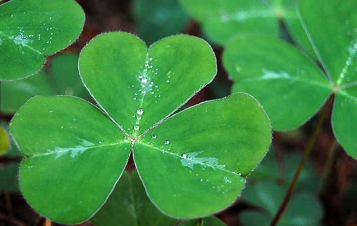 Where did the most well-known Irish symbols come from?