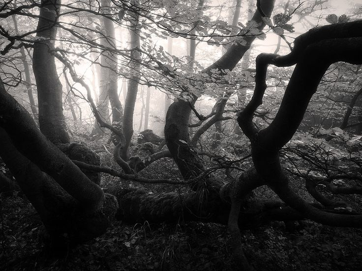 Jan Bainar: Tajuplny les
