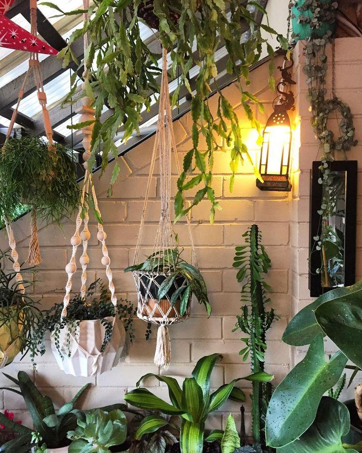 Die besten 25+ Euphorbia pflanze Ideen auf Pinterest Bleistift - indoor garten anlegen geeignete pflanzen