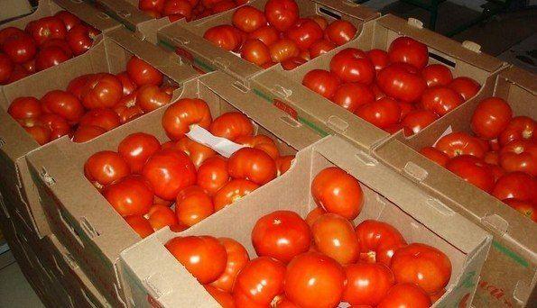 Как сохранять томаты  Сохранить помидоры свежими до весны — желание и цель многих дачников. Это понятно: плоды содержат множество полезных минеральных веществ, калий, железо и целый комплекс витаминов. Конечно, в наше время приобрести в магазинах красивые свежие томаты можно круглый год, но своих, с огорода, они же не заменят, правда? Выращенные своими руками более сочные, ароматные и очень-очень вкусные.    Какие же сорта могут лежать долго, как правильно их хранить и, главное, — где? Об…